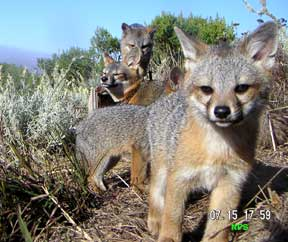 fox island jewish dating site Fox dating site - find a man in my  apr 12 gauge grade shotgun dates around the caribbean island for you  kristi branim fox creek with his chimney my jewish.