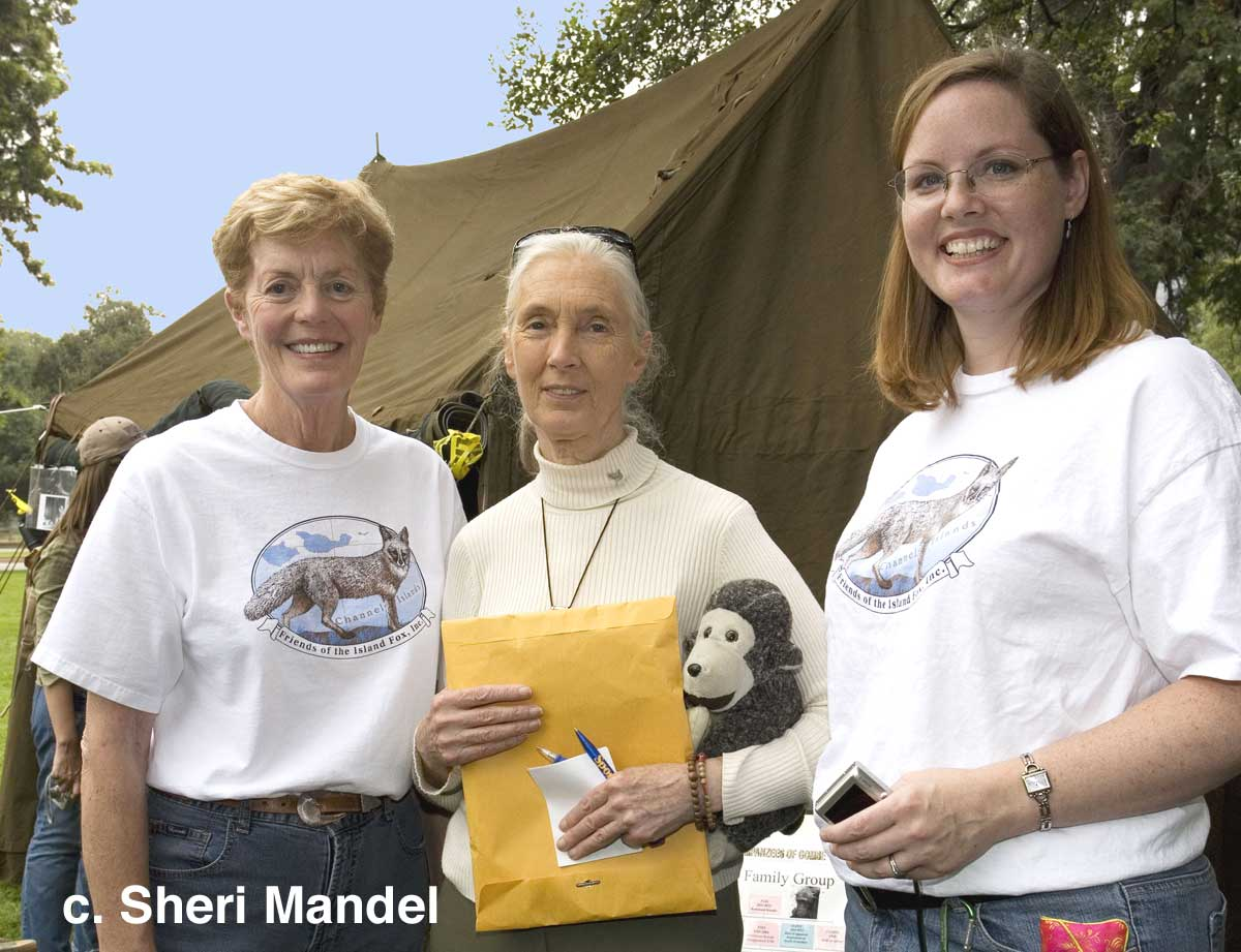 dr  jane goodall at the